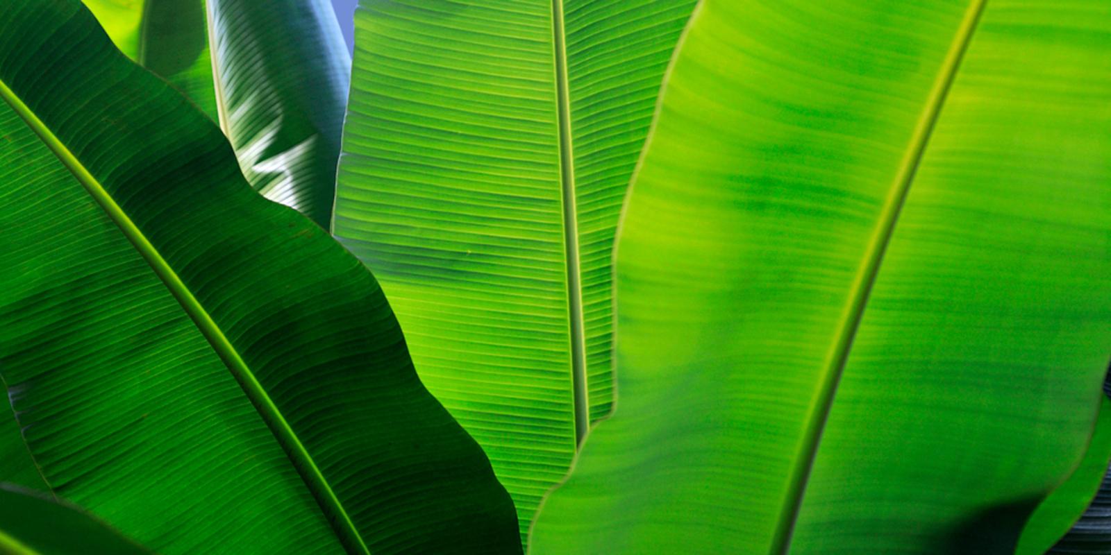 Planten luchtvochtigheid verhogen