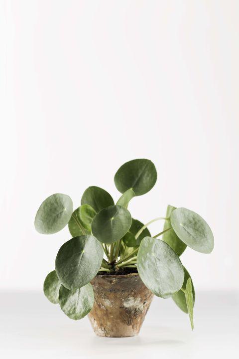 kleine kamerplanten voor een knusse woonruimte, Deco ideeën